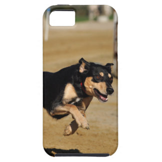 dog agility practicing iPhone 5 cover