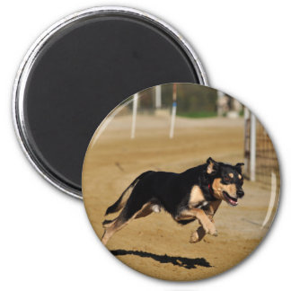 dog agility practicing 2 inch round magnet