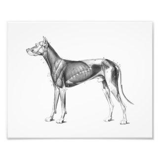 Dog Anatomy Print Muscles B/W