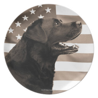 Dog and American flag Plate