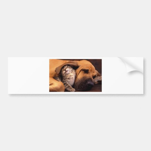 Dog and Cat - Friends Forever Bumper Stickers