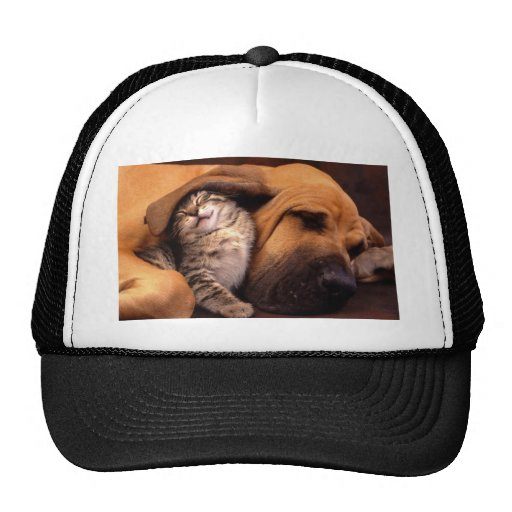 Dog and Cat - Friends Forever Mesh Hats