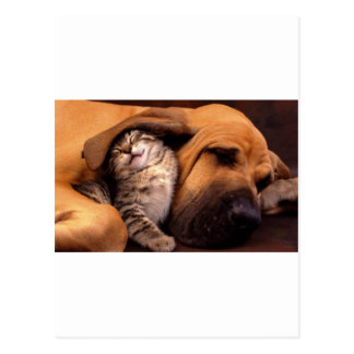 Dog and Cat - Friends Forever Postcard