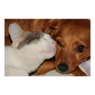 Dog and Cat love Posters