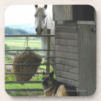 Dog and horse at ranch in Menton, France Coaster