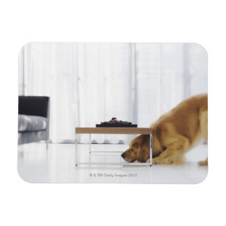 Dog and table magnets
