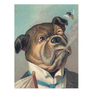 Dog and Wasp Vintage Illustration Postcard