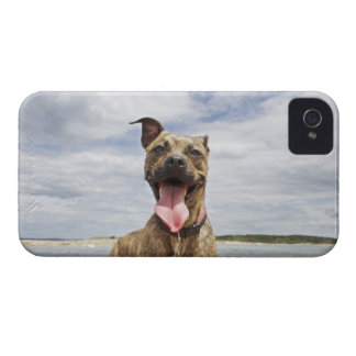 dog at beach iPhone 4 Case-Mate cases
