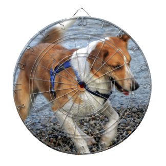 dog at lake dartboard