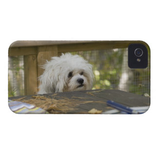 Dog at picnic table iPhone 4 cover