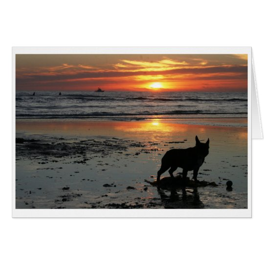 Dog Beach Card