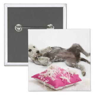 Dog behaviour training 15 cm square badge