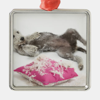 Dog behaviour training christmas ornament