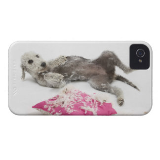 Dog behaviour training iPhone 4 case