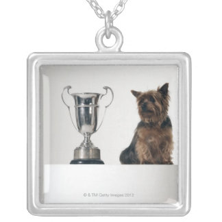 Dog beside a large silver trophy silver plated necklace