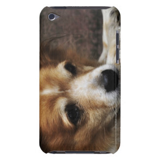 Dog, Bhaktapur, Bhaktapur District, Bagmati, Case-Mate iPod Touch Case