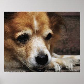 Dog, Bhaktapur, Bhaktapur District, Bagmati, Poster