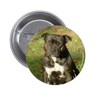 Dog breeds Staffy 6 Cm Round Badge