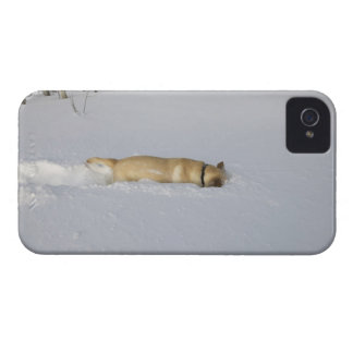 Dog burrowing in snow Case-Mate iPhone 4 case