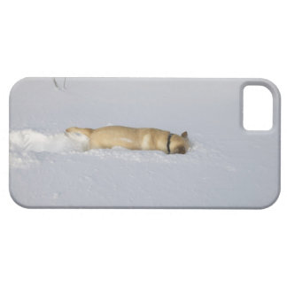 Dog burrowing in snow iPhone 5 covers