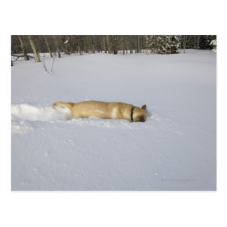Dog burrowing in snow postcard