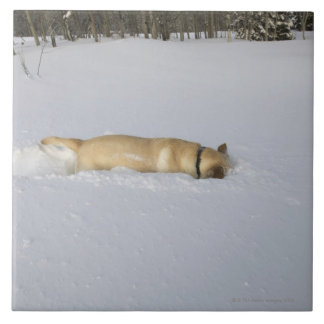 Dog burrowing in snow tile
