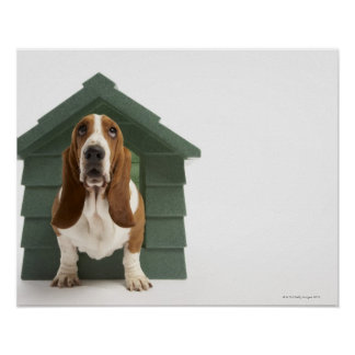 Dog by doghouse poster