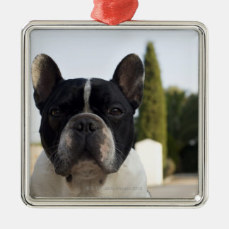 Dog by entrance Silver-Colored square decoration