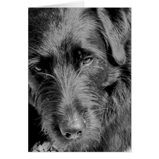 Dog cards, Dora Card