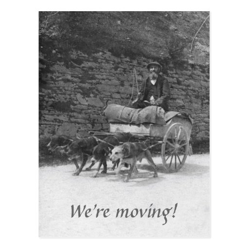 Dog cart with bearded man moving postcards