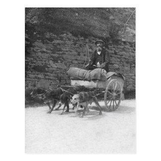 Dog cart with bearded man postcard