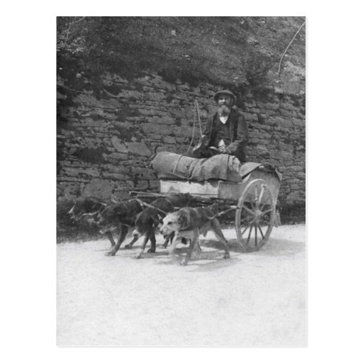 Dog cart with bearded man post cards