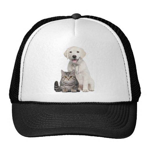 Dog cat mesh hats