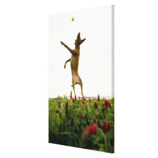 Dog catching tennis ball in mid-air canvas print