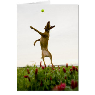 Dog catching tennis ball in mid-air card