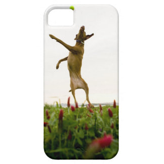 Dog catching tennis ball in mid-air iPhone 5 cover