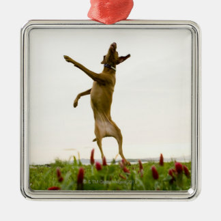Dog catching tennis ball in mid-air Silver-Colored square decoration