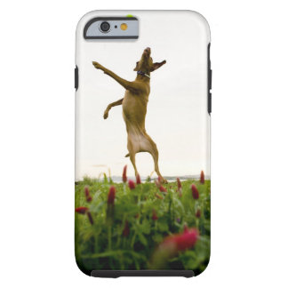Dog catching tennis ball in mid-air tough iPhone 6 case