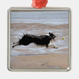 Dog chasing a ball at the beach Silver-Colored square decoration