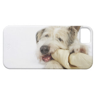 Dog Chewing on Rawhide Bone Case For The iPhone 5