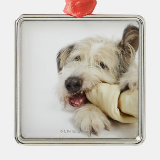 Dog Chewing on Rawhide Bone Silver-Colored Square Decoration