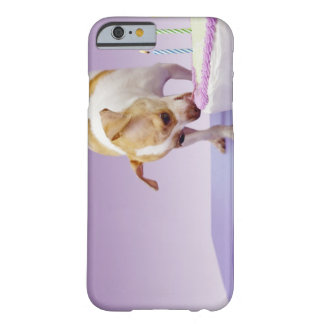 Dog (chihuahua) eating birthday cake on table barely there iPhone 6 case
