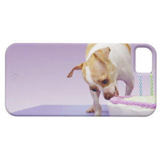Dog (chihuahua) eating birthday cake on table iPhone 5 case