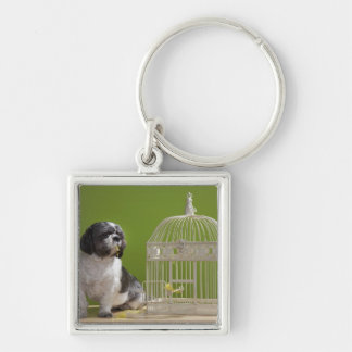 Dog close to a bird cage Silver-Colored square key ring
