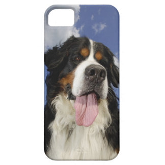 Dog, close-up barely there iPhone 5 case