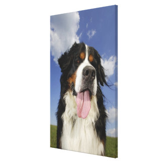 Dog, close-up canvas print