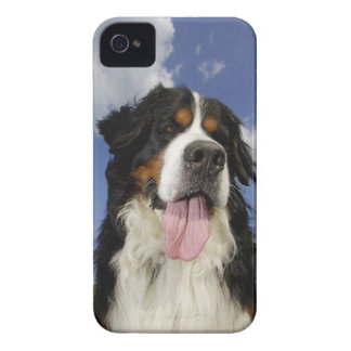 Dog, close-up iPhone 4 cover
