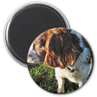 Dog Cocker Spaniel Sitting Magnet