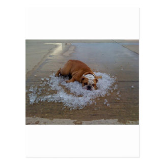 Dog cooling off  on ice postcard