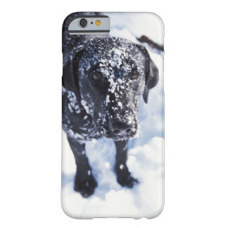 Dog covered in snow barely there iPhone 6 case